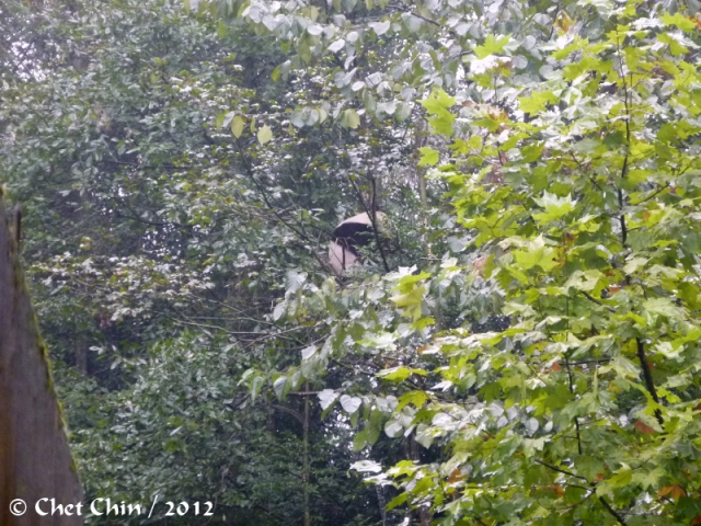 fengyi-tree-bxp-120925