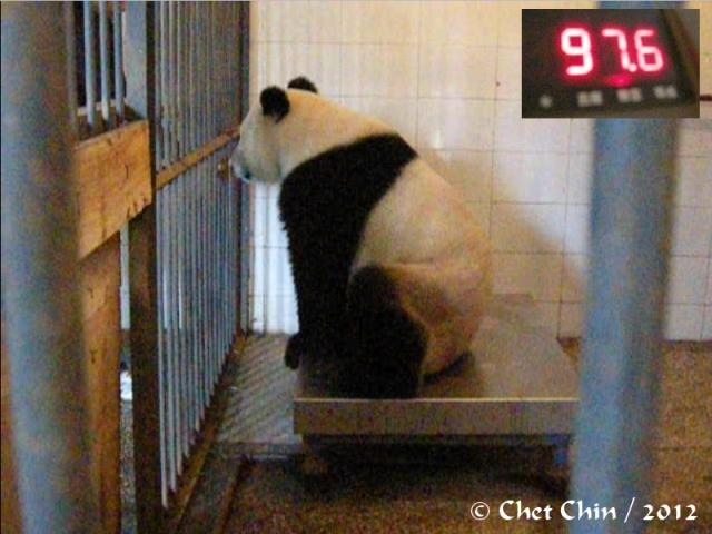 fengyi_weighing-bxp-120925